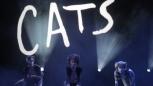 Hello Kitties | Cindy Davis |